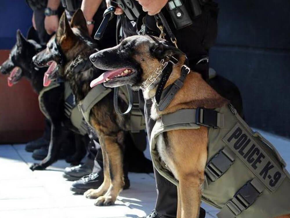 k9 dogs wearing a bullet proof vest