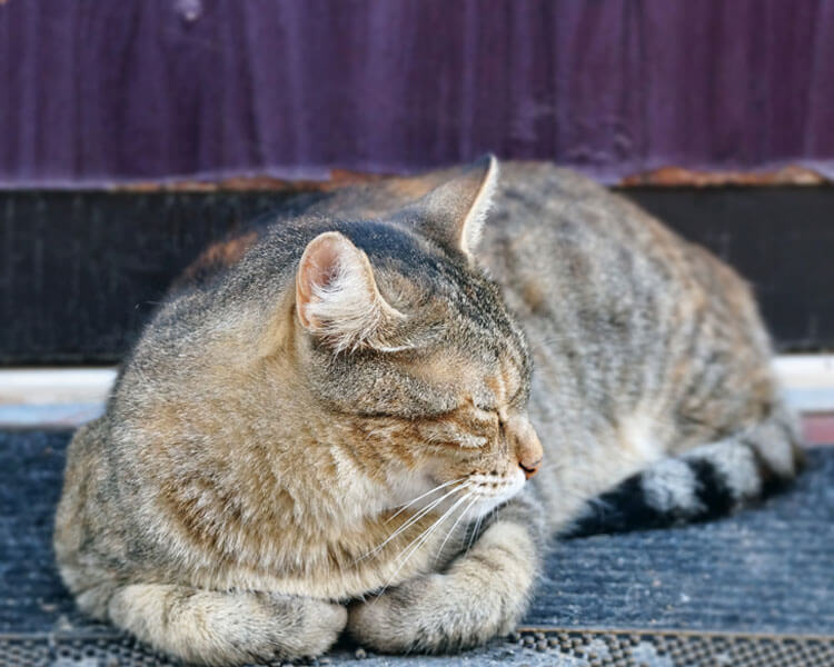 an old cat lying on the ground