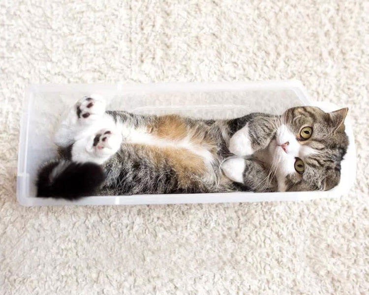 maru, the most clicked cat in youtube