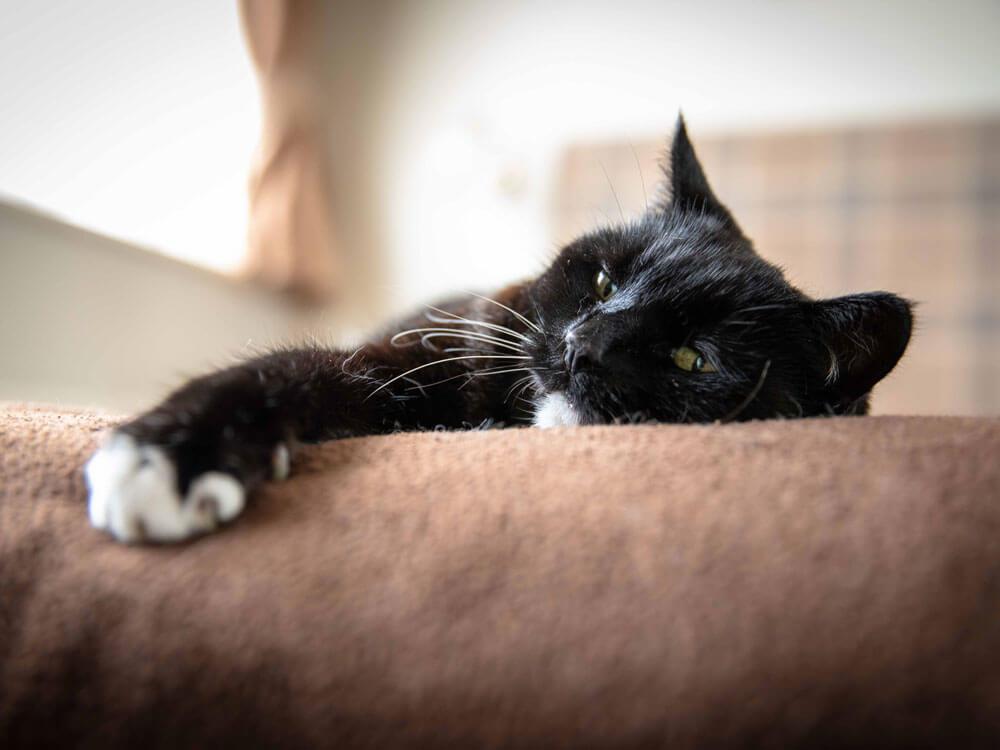 Senior Cat Care