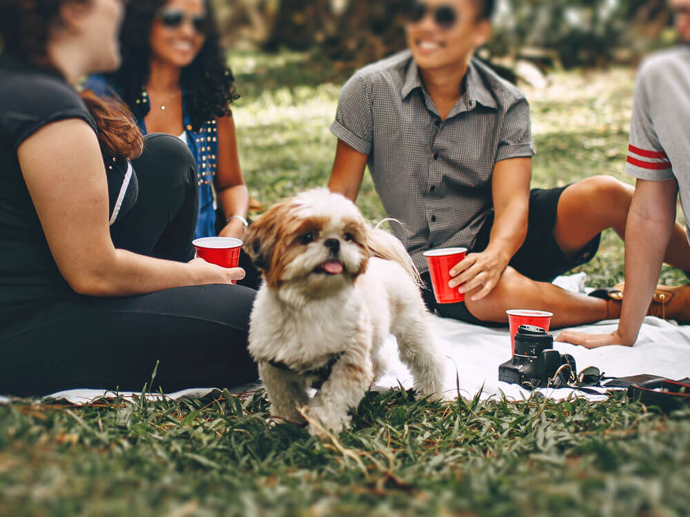 How Pets Influence Our Relationships