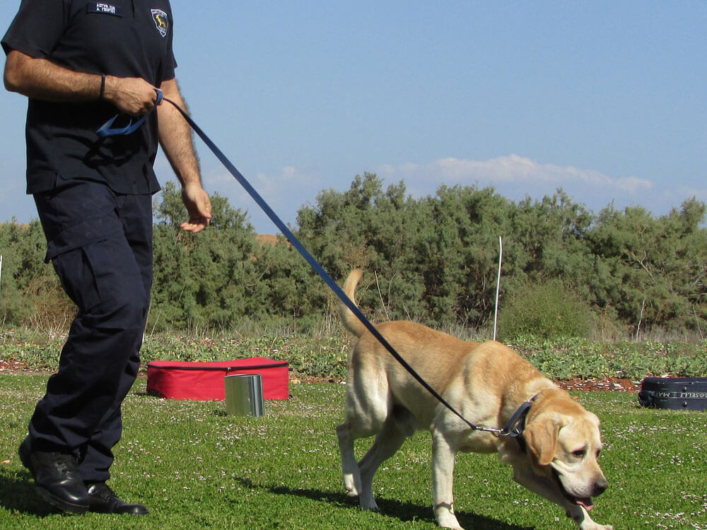 a police with a k9 dog sniffing on the grass