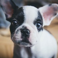 Puppy Vomiting: Causes and Treatments