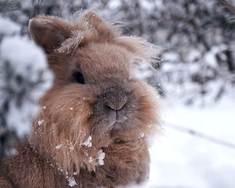 rabbit in a snow field