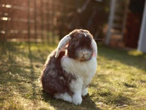 A Must-Read Guide to Rabbit Litter Training