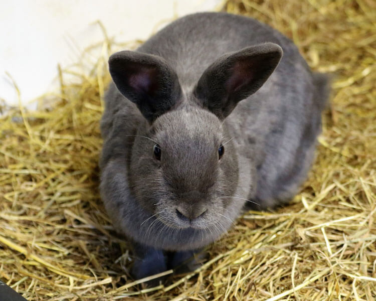 a rabbit in a hay litter tray