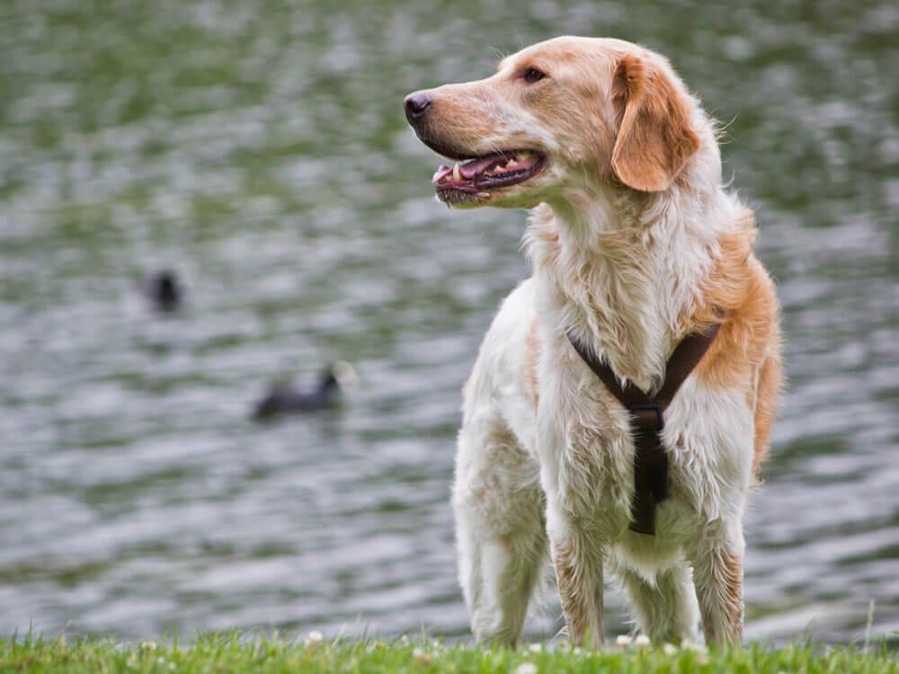 Pet Insurance vs Self-Insurance for Pets