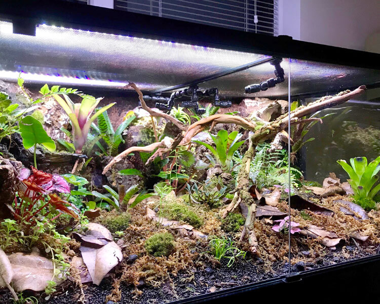 terrestrial tank for frogs