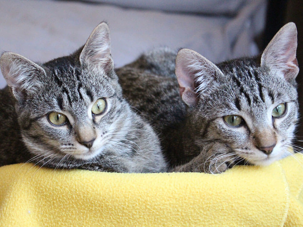 two cats lying side-by-side