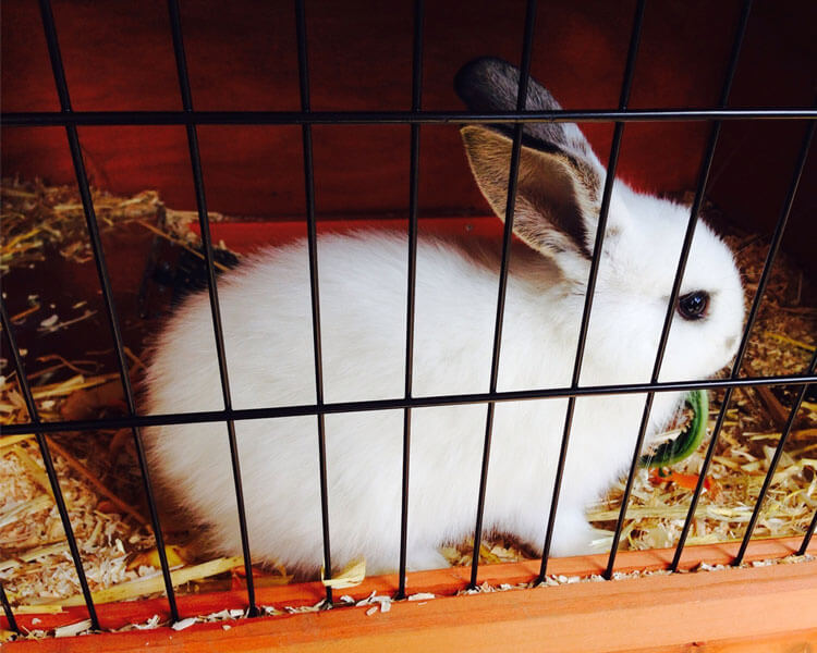 a white rabbit in a cage