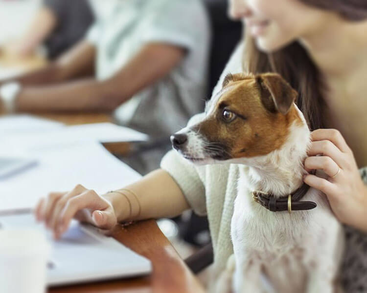 a woman and dog searching for a pet insurance company from the laptop