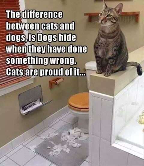 a cat standing above a wall in a comfort room after making a mess on the floor