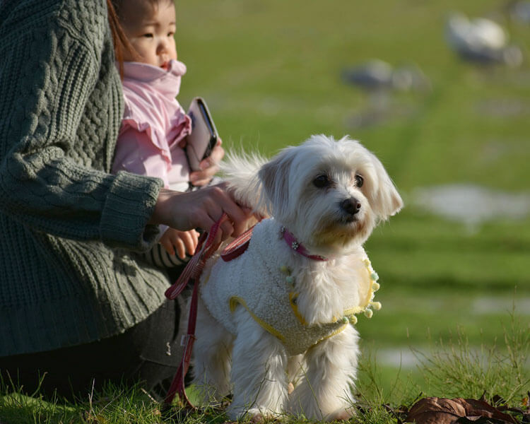 a dog with its owner and child sitting on the grass