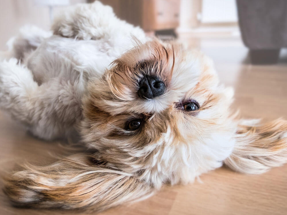 Calls for More Flexible Housing Policies to Allow Pets