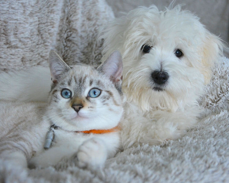 a cat and dog lying side by side on the sofa