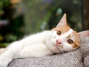 6 Infectious Cat Diseases and How to Spot One