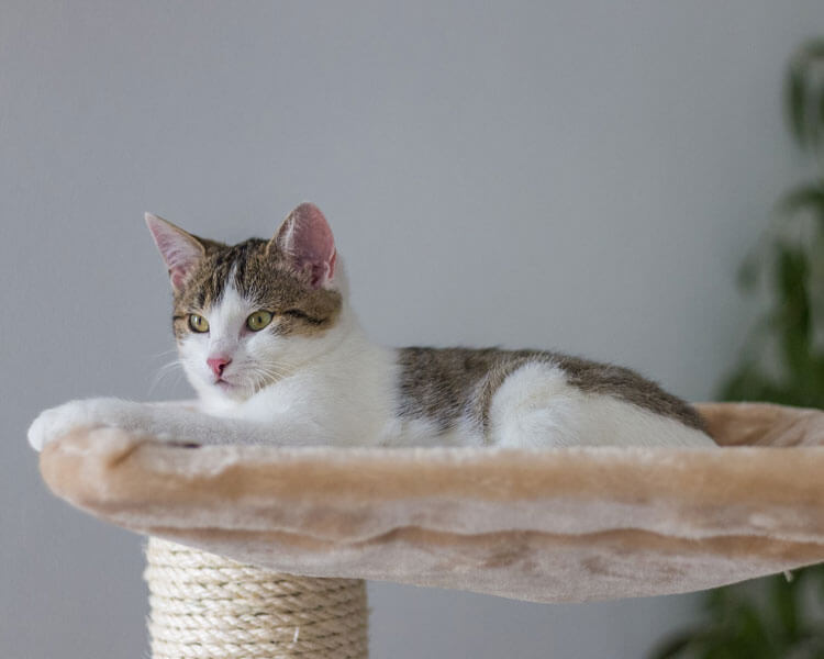 a cat lying in a cat-scratching post bed