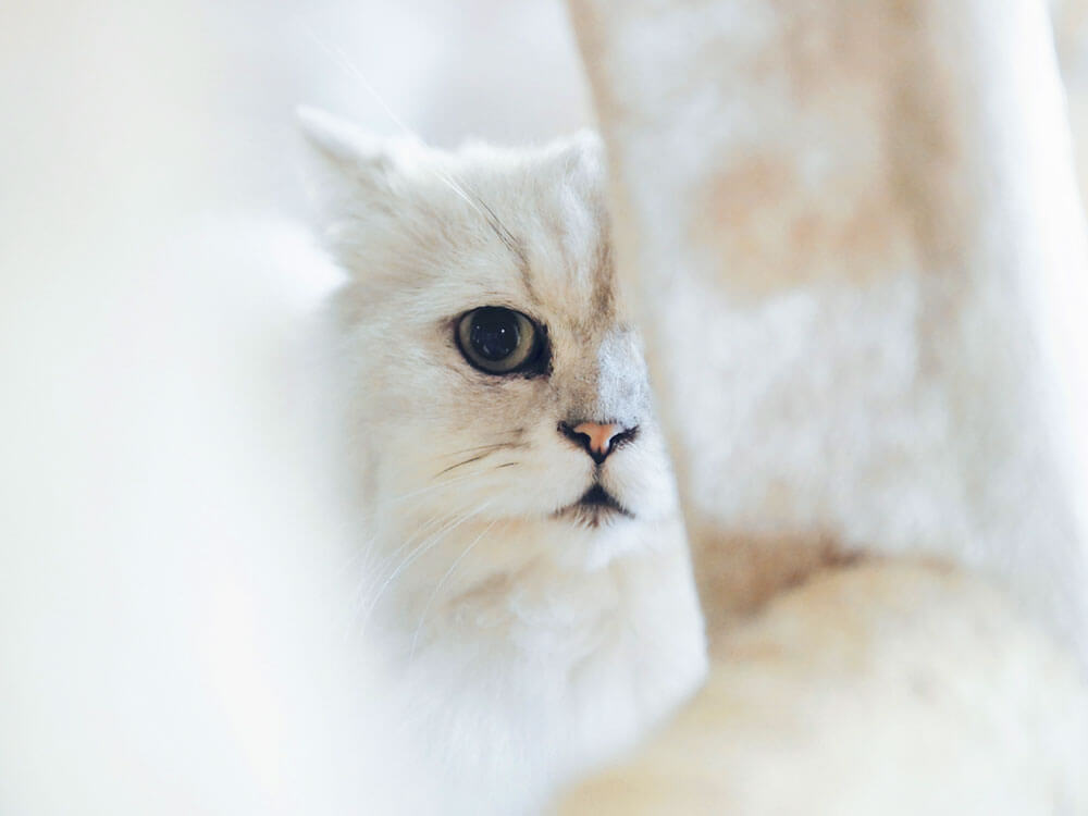Cat Myths: What You Know Might Not Be True at all