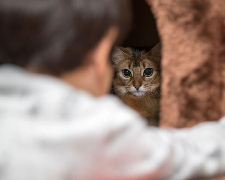 a cat staring to its owner