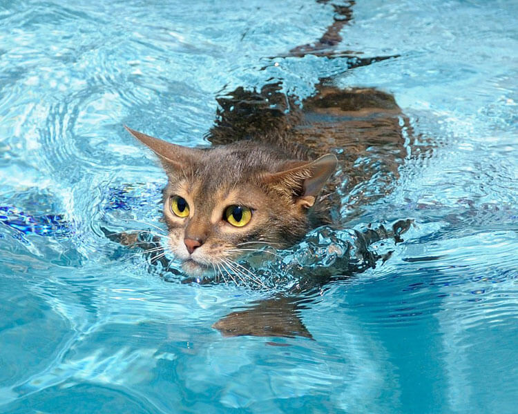 a cat swimming on the pool