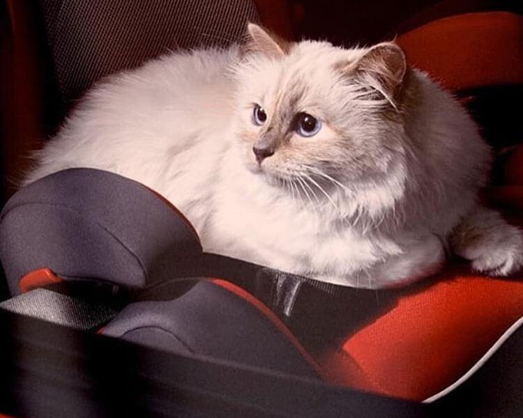 Chanel Fashion Designer Karl Lagerfeld Dies At 85 Leaving Cat