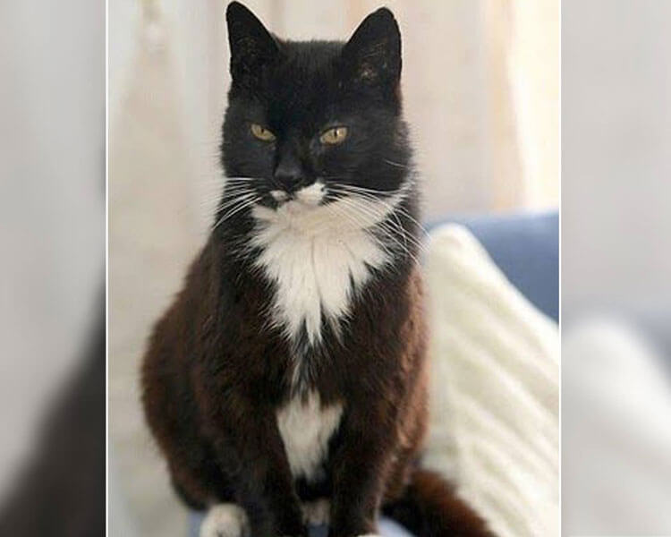 creme puff, lived for thirty-eight years and recognised as the oldest cat on record