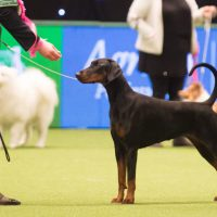 The World's Greatest Dog Show Crufts 2019 Is Back!