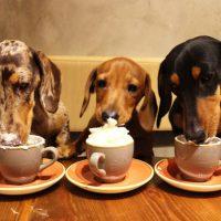 Dachshund and Pug Cafés to Pop Up in Bristol