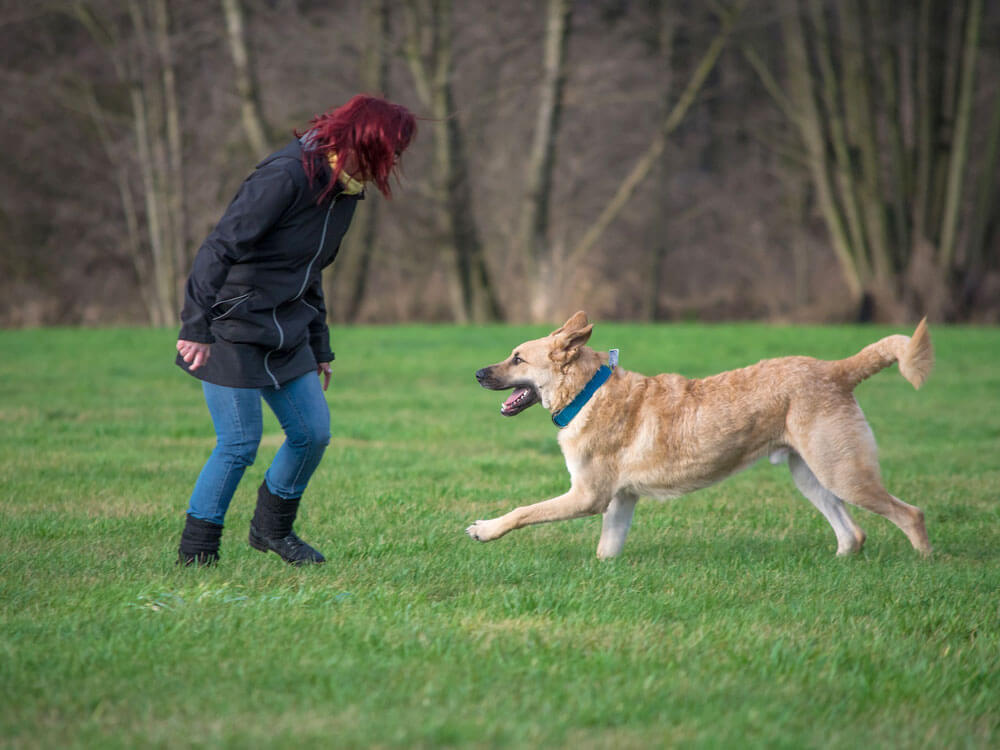 a dog with active lifestyle helps to prevent dog dementia