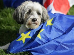 Pet Owners Forced to Shell out £100+ Vet Fees due to Brexit Ambiguity