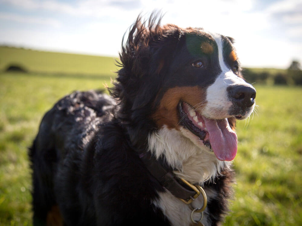 Dog Health Check Process You Should Know