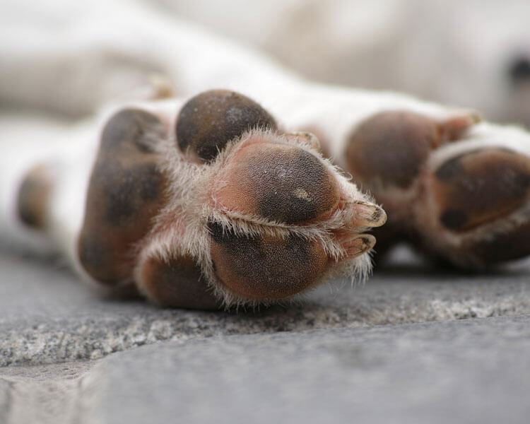 dog health check includes the paws and claws