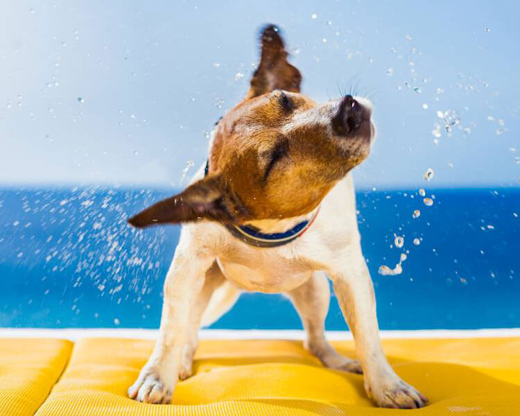 a dog shaking off the water