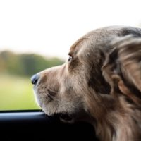 Learning Sympathy and Humanity from Dogs