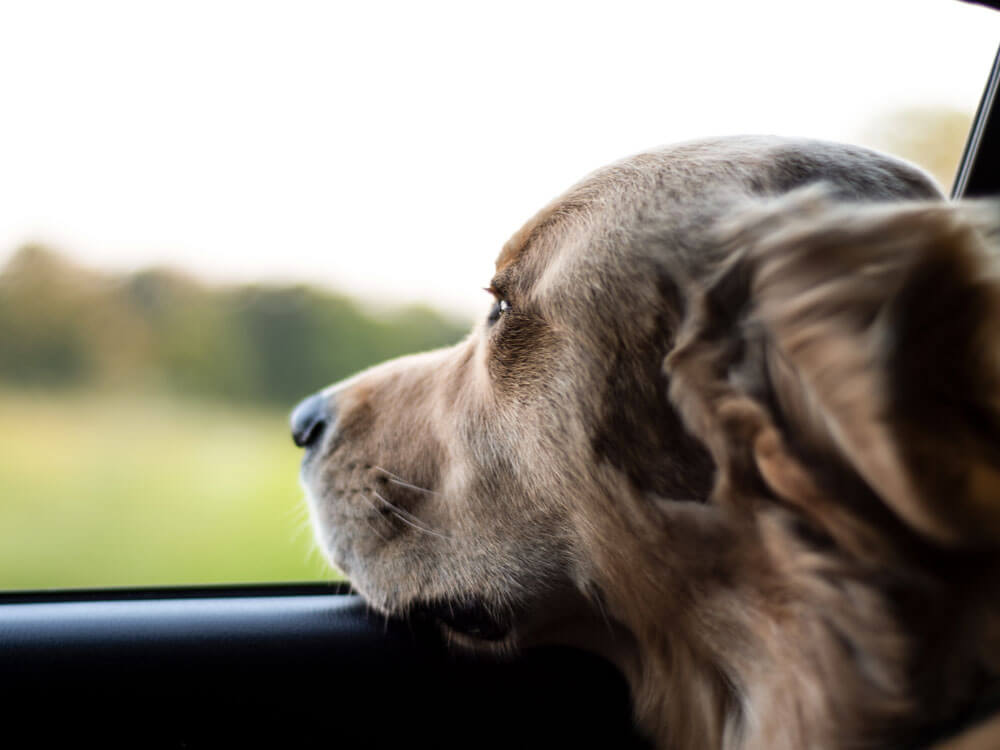Dog Stories of 2018: Learning Sympathy and Humanity from Dogs