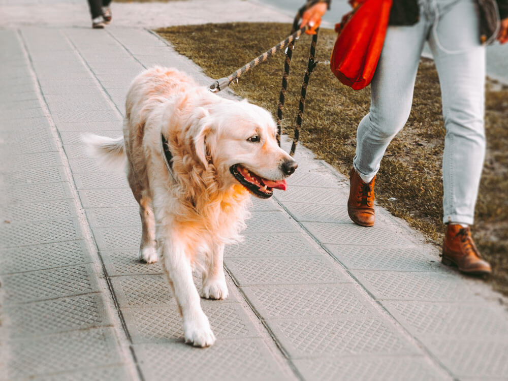 A Dog Walking Guidelines Released Ensuring Pet's Safety