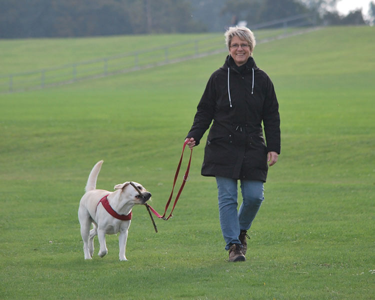 a volunteer walking with a rescue dog