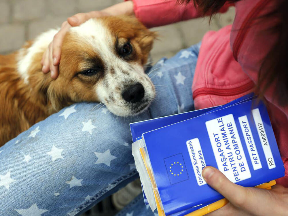 a dog holding a pet passport of her dog