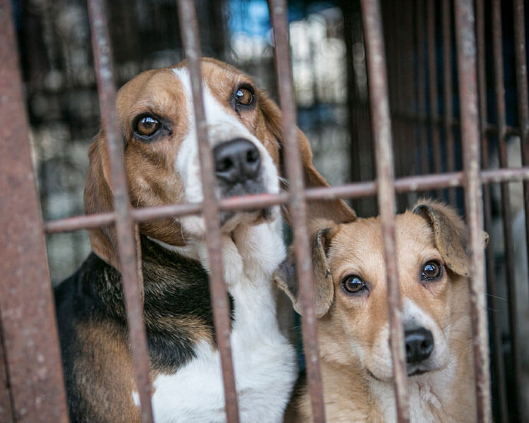 dogs in the cage rescued
