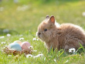 What Happens to Rabbits After Easter?