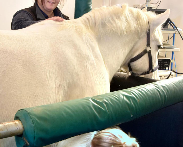 a horse with equine influenza checked in the laboratory by two female vets