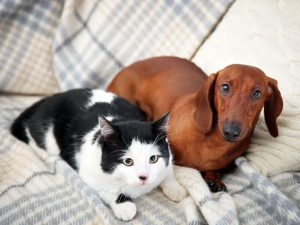 Brexit Bill: Eating Dogs and Cats Could Be Made Illegal in the UK