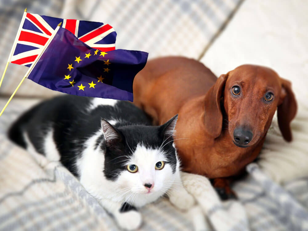 Brexit Bill: Eating Dogs and Cats Could Be Made Illegal in