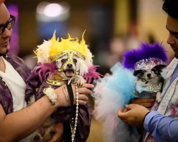 Dogs joining the 16th annual New York Pet Fashion Show 2019 in Hotel Pennsylvania