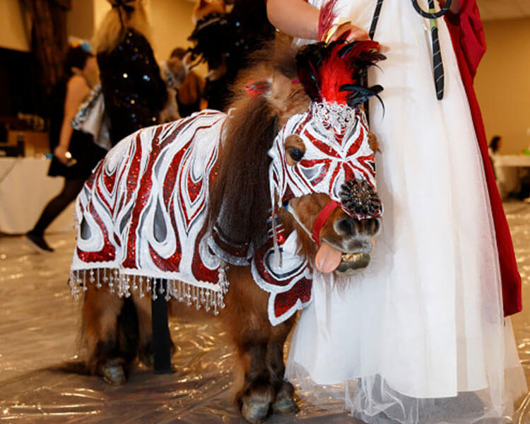 a horse dressed in a white and red sequined cape coupled with a matching mask for a pet fashion show