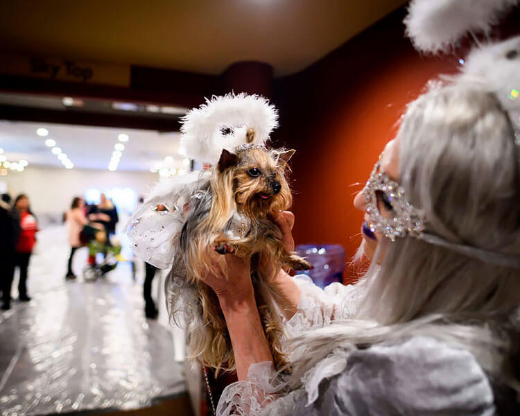 a dog wearing an angelic attire for a pet fashion show