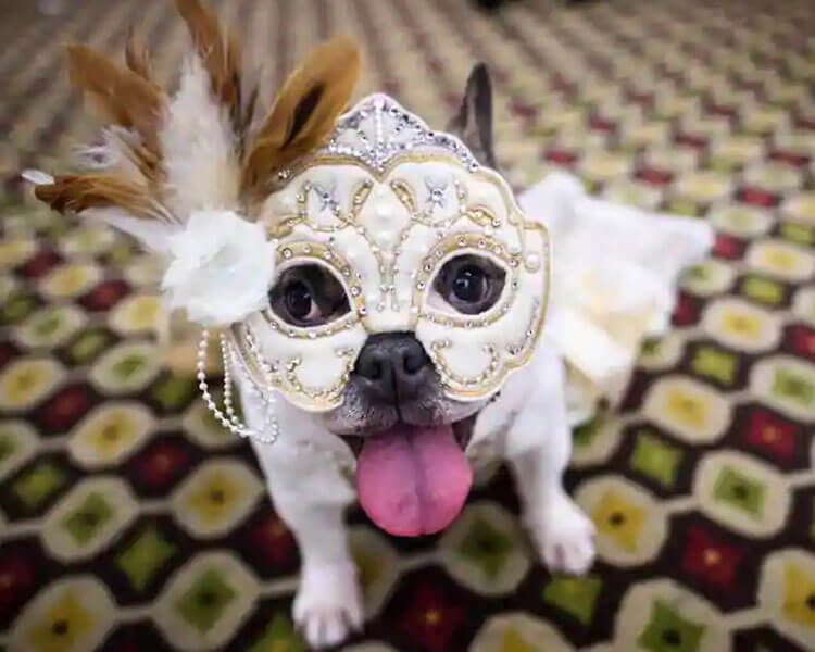a dog wearing a mask for a pet fashion show