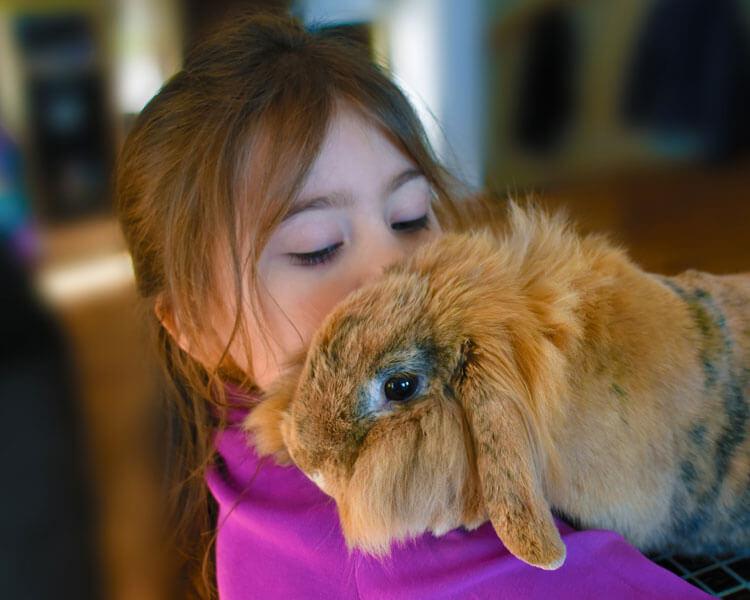 a kid hugging a rabbit