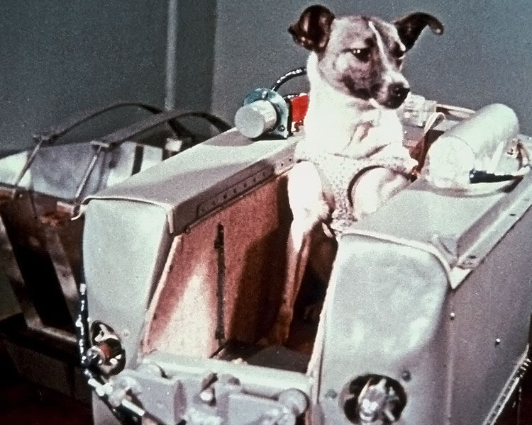 laika, the first dog launched in space