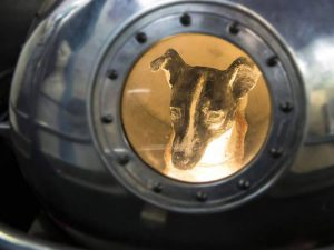 Laika the Space Dog and Other Animals Launched into Space